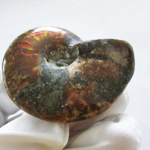虹入り アンモナイト 化石 t485-2664|seian