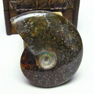アンモナイト 化石 t653-3390|seian