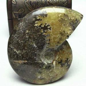 アンモナイト 化石 t653-3440|seian