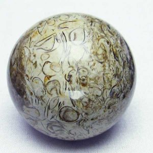 フォッシルシェル 貝 化石  丸玉 49mm  パワーストーン 天然石 t757-1359|seian