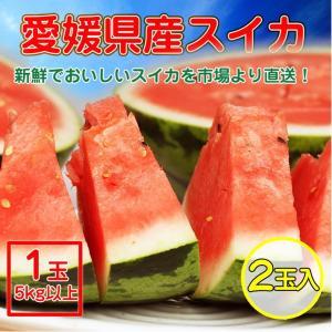 訳あり 愛媛県産 すいか 2玉/スイカ1玉5kg以上...