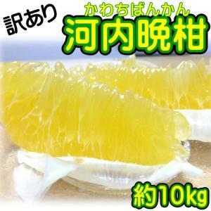 美生柑や宇和ゴールド、愛南ゴールドなど様々な呼び名で 知られている河内晩柑はここ愛媛県が生産量No....