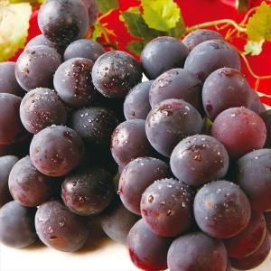 ぶどう 福岡・熊本産 ニューベリーA(約2kg)4〜9房 ご家庭用 葡萄 グレープ フルーツ 国華園|seikaokoku