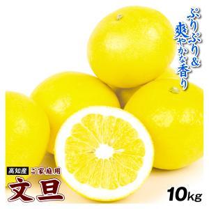 みかん 高知産 お買得 ぶんたん 10kg 1箱 送料無料 食品 国華園|seikaokoku