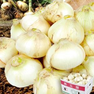 熊本産 新たまねぎ(10kg)S〜2L 玉葱 ご家庭用 野菜 国華園|seikaokoku