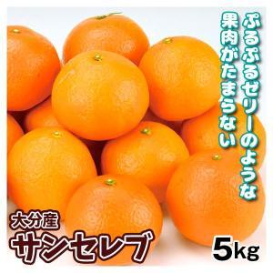 みかん 大分産 お買得 サンセレブ 5kg 1箱 送料無料 食品 国華園|seikaokoku