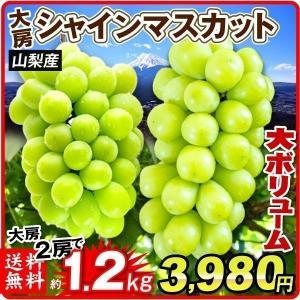 ぶどう 山梨産 シャインマスカット 約1.2kg ご家庭用 たねなし 皮ごと 大粒 パック  葡萄 ブドウ フルーツ くだもの 食品 国華園|seikaokoku