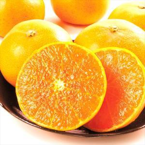 みかん ご家庭用 佐賀・唐津産大玉せとか(5kg)蜜柑 柑橘 フルーツ 果物 食品 国華園 seikaokoku