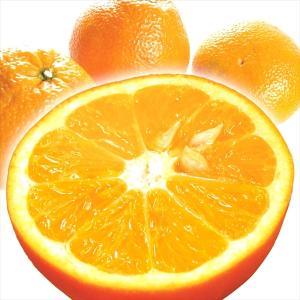 みかん 愛媛産 伊予柑 10kg 柑橘 食品 国華園 seikaokoku