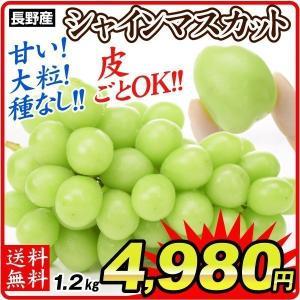 ぶどう 長野産 シャインマスカット 1.2kg 数量限定 ご家庭用 産地直送 葡萄 ブドウ フルーツ くだもの 食品 国華園|seikaokoku