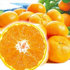 みかん 和歌山産 紀南の極旨みかん (10kg) 大玉 2L~4L ご家庭用 柑橘 フルーツ 国華園