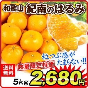みかん 和歌山産 紀南のはるみ (5kg) ご家庭用 晴見 柑橘 フルーツ 国華園
