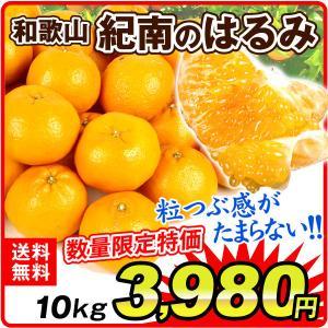 みかん 和歌山産 紀南のはるみ (10kg) ご家庭用 晴見  柑橘 フルーツ 国華園