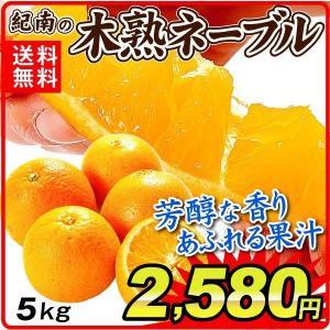 みかん 和歌山産 紀南のネーブル (5kg) ご家庭用 木熟 柑橘 フルーツ 国華園