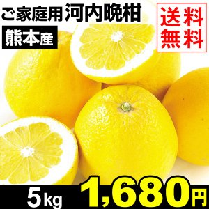 みかん 熊本三角産 ご家庭用 河内晩柑 5kg 1箱 送料無料