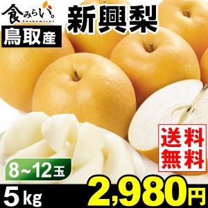 梨 【お買得】鳥取産 新興梨 5kg 1箱 送料無料 ご家庭...