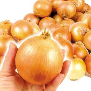 玉ねぎ 淡路島産 グルメこたまねぎ 10kg 1箱 送料無料 小玉たまねぎ 国華園|seikaokoku