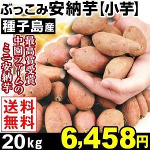 安納芋 種子島産 ぶっこみ安納芋 小芋 20kg 1組(10...