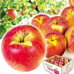 リンゴ 青森産 大特価 葉とらずふじ 10kg1箱 送料無料...