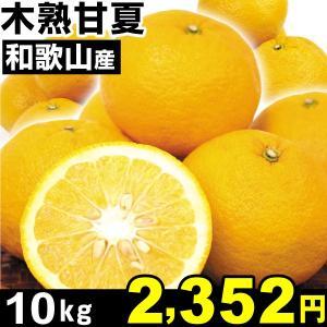 みかん 和歌山産 木熟甘夏 10kg1箱 ご家庭用 食品 seikaokoku