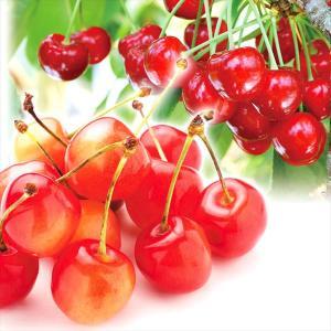 さくらんぼ 山形産 さくらんぼ 佐藤錦&紅秀峰 800g 1...
