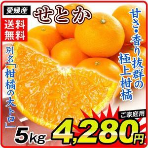 みかん 愛媛産 ご家庭用 せとか 5kg 1箱 送料無料 食品 国華園|seikaokoku