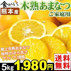 みかん ご家庭用 熊本産 木熟あまなつ 5kg 1箱 送料無料 ノーワックス 樹上完熟 甘夏 seikaokoku