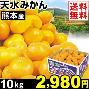 みかん 熊本産 天水みかん 10kg1箱 送料無料 食品