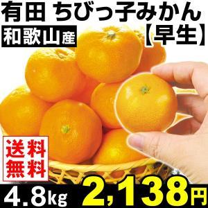 みかん 和歌山産 ちびっ子みかん 【早生】 4.8kg1組 小玉 送料無料 蜜柑 食品 グルメ|seikaokoku