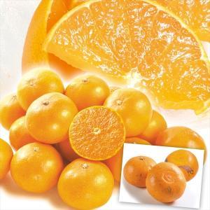 みかん 愛媛産 ご家庭用 せとか 10kg 1組 送料無料 食品 国華園|seikaokoku