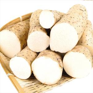 山いも 青森産 長いも【切れ子】 10kg ご家庭用 送料無料 食品|seikaokoku