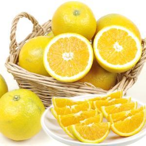 みかん バレンシアオレンジ 5kg 和歌山県産 ご家庭用 柑橘 食品 seikaokoku