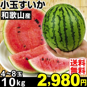 商品情報      皮のキワまで果肉がぎっしり!食べきり&極甘。片手で持てるほど小ぶりで冷蔵庫にもそ...