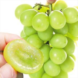 ぶどう 和歌山産 ご家庭用 シャインマスカット 2房(約1.2kg)種なし 皮ごとOK 極甘 葡萄 ...