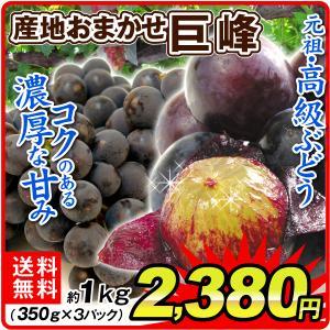 ぶどう 産地おまかせ 巨峰(約1kg)約350g×3パック ご家庭用 濃厚 きょほう 葡萄 グレープ フルーツ 国華園|seikaokoku