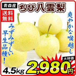 梨 青森・南部産 ちび 八雲梨(4.5kg)ご家庭用 小玉 やくも なし 二十世紀梨の改良品種 フルーツ 果物 国華園|seikaokoku