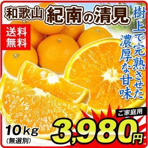 みかん 清見オレンジ 5kg 和歌山県産 紀南の清見オレンジ ご家庭用 seikaokoku