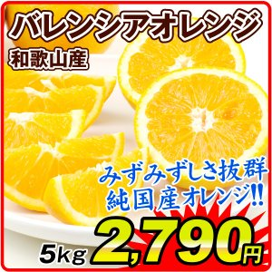 みかん バレンシアオレンジ 5kg 和歌山県産 紀南のバレンシアオレンジ ご家庭用 seikaokoku
