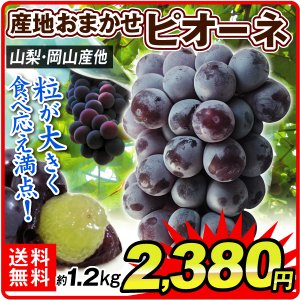 ぶどう 産地おまかせ ピオーネ(約1.2kg)約300g×4パック ご家庭用 葡萄 グレープ フルーツ 国華園|seikaokoku