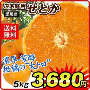 みかん 愛媛産 ご家庭用 せとか 5kg 柑橘 食品 seikaokoku