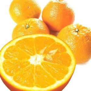 みかん 愛媛産 伊予柑 10kg 柑橘 食品 seikaokoku