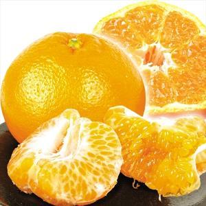 みかん 愛媛産 はるみ 5kg 柑橘 食品 seikaokoku