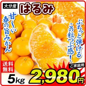 みかん 大分産 訳あり はるみ 5kg 1箱 送料無料 食品 国華園|seikaokoku