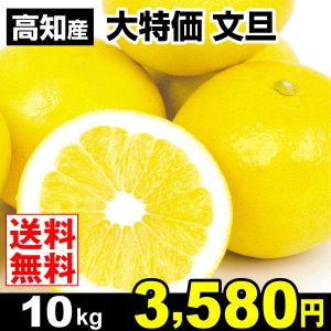 みかん 大特価 高知産 文旦 10kg 柑橘 食品 seikaokoku
