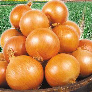 たまねぎ 淡路島産 たまねぎ(10kg)L〜2L 玉葱 ご家庭用 新たま ブランド あわじ玉葱 野菜 国華園|seikaokoku