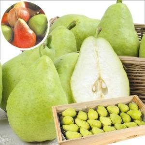 梨 青森産 おまかせ洋梨 10kg 木箱 なし 食品 国華園|seikaokoku