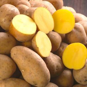 じゃがいも 北海道産 インカのめざめ 10kg 野菜 じゃが芋 野菜|seikaokoku