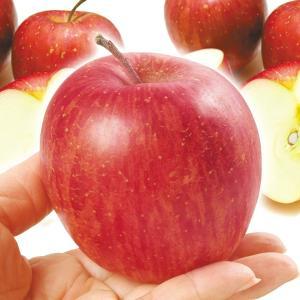 りんご 青森産 ちびふじ(10kg)林檎 食べきりサイズ フルーツ 果物 国華園|seikaokoku