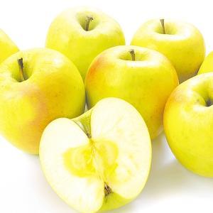 りんご 青森産 ぐんま名月(10kg)28〜56玉 希少品種 ぐんまめいげつ 群馬名月 林檎 フルーツ 果物 国華園|seikaokoku