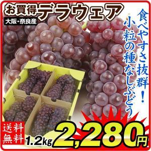 ぶどう デラウェア 約1.2kg お買得 大阪・奈良・山形産 ご家庭用 葡萄 ブドウ 現在発送中 seikaokoku